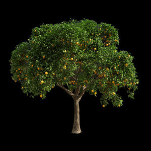 3D fruit tree orange