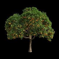 fruit tree orange 3D model