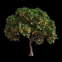 Orange Tree 4