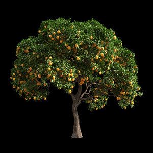 3D fruit tree orange