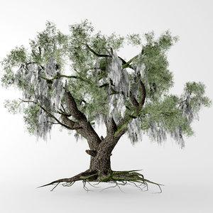 live oak 3D model