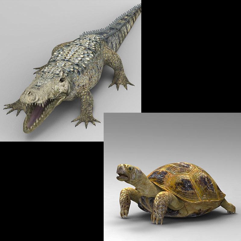 turtle alligator 3D