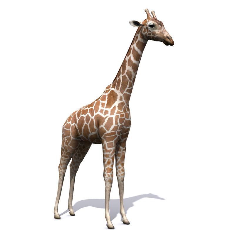 giraffe animal 3D