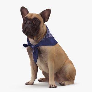 french bulldog sitting 3D