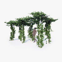 hedera ivy english vine 3D