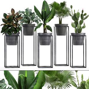 3D model loft exotic plants