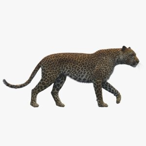 3D model leopard rigged