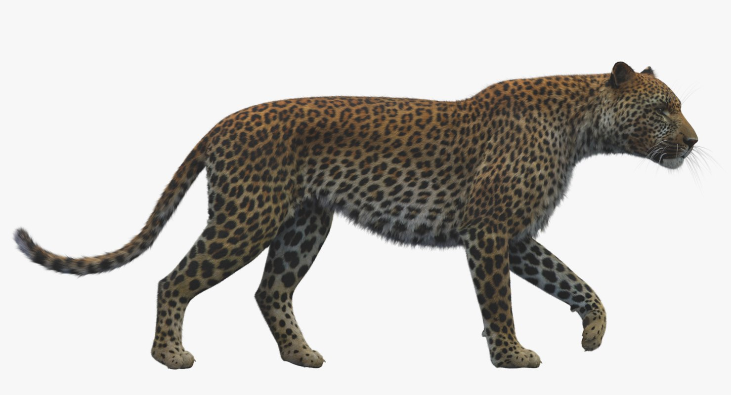 3D model leopard rigged