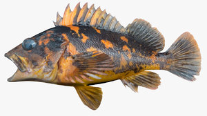 black yellow rockfish 3D model