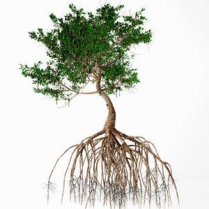 3D model mangrove tree