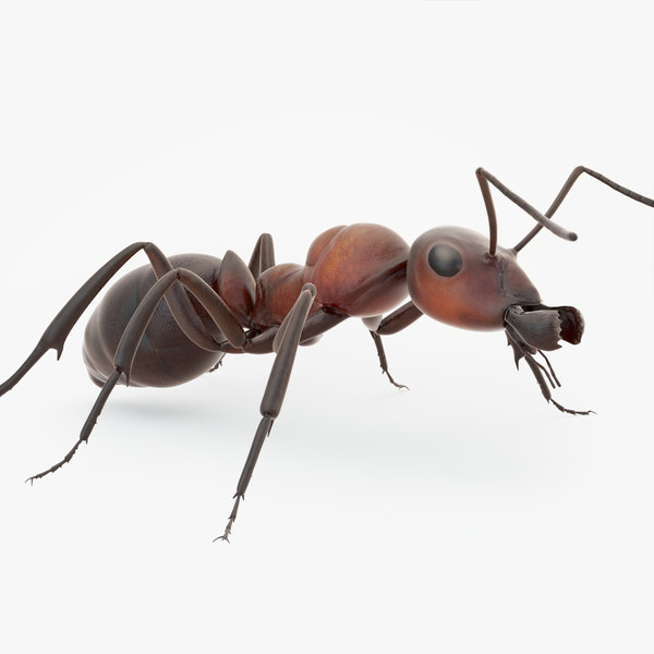 rigged ant 3D model