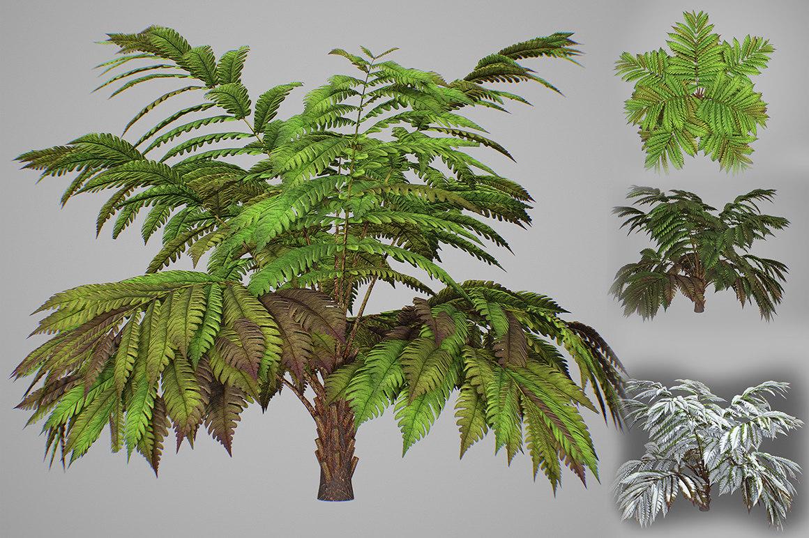 3D model alsophila fern