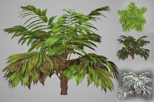 3D model alsophila fern