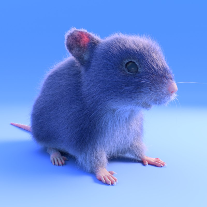 realistic mouse - fur color 3D model