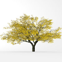 3D fall cherry