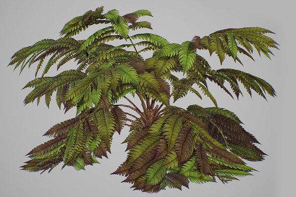 3D alsophila fern old model