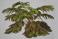 3D alsophila fern old model