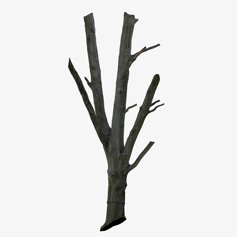 3d tree trunk scanned cleaned model