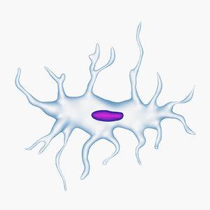 osteocyte 3D