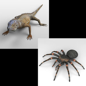 3D iguana tarantula