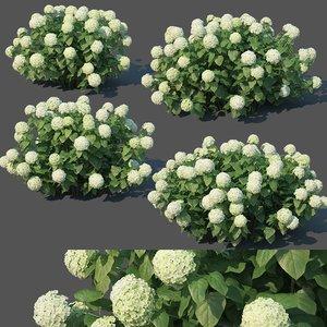 3D hydrangea arborescens model