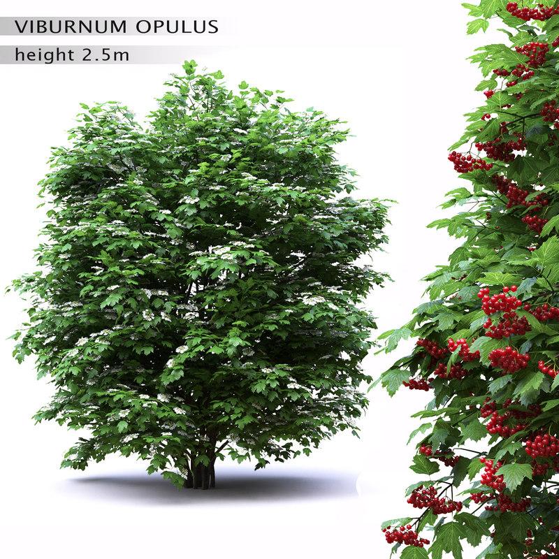 3D viburnum