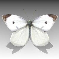 white butterfly 3D model
