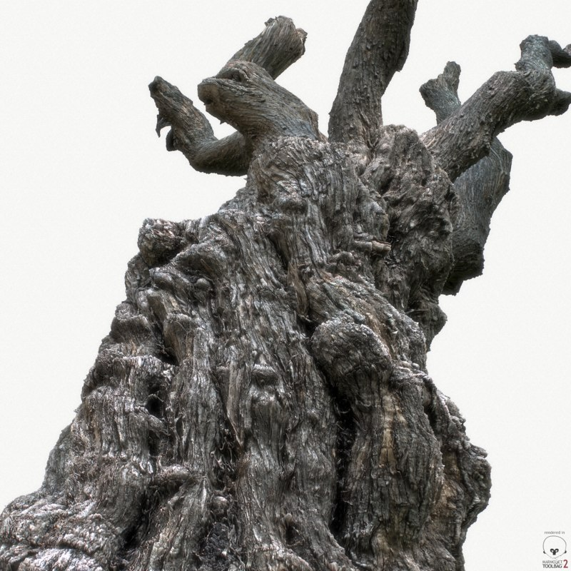 cleaned old tree 3D model
