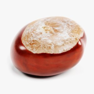 3D chestnut 1 model
