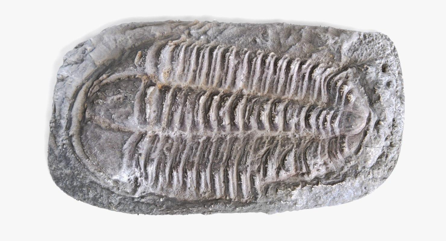 3D trilobite fossil 1 model