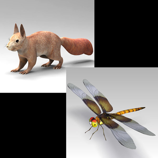 3D squirrel dragonfly