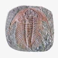 3D trilobite fossil model