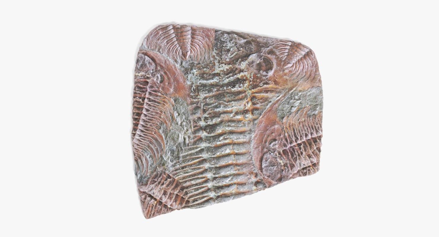 3D model trilobite fossil