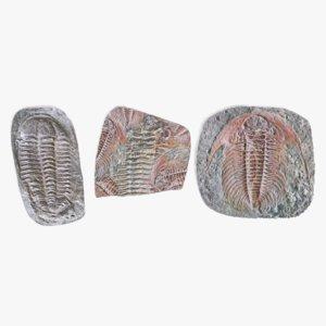 trilobite fossils model