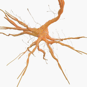3D nerve cell