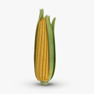 3D ears-of-corn---01-cv1