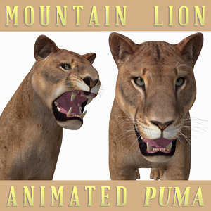 3D mountain lion