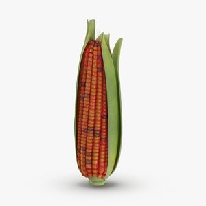ears-of-corn---01-cv3 3D
