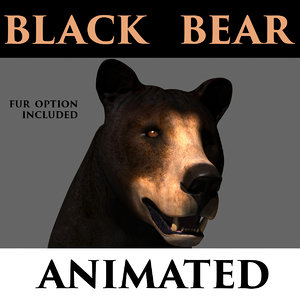 black bear animation 3D model