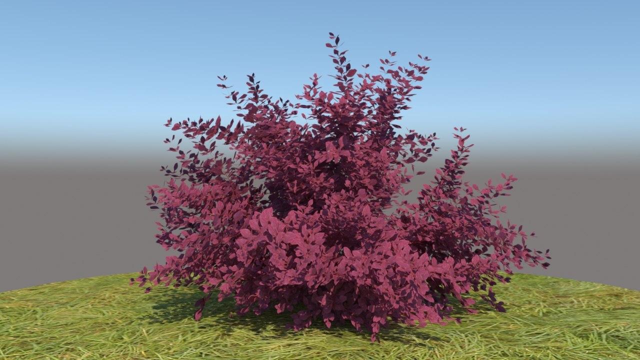 3D berberis thunbergii atropurpurea nana