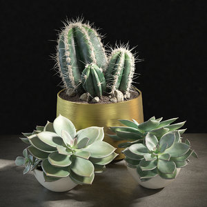 cactus succulent pot 3D