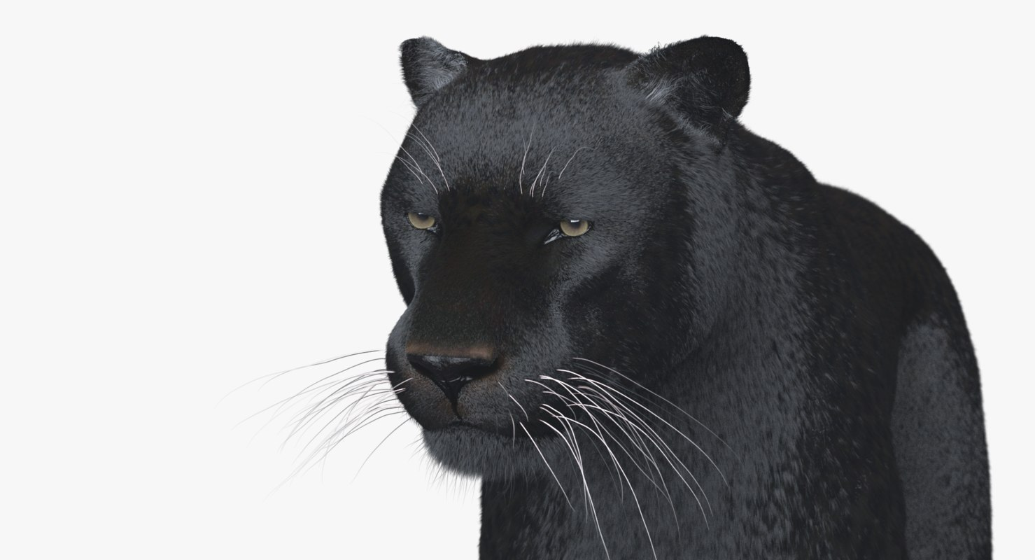 panther rigged 3D