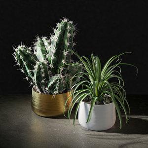 cactus plant pot 3D