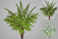 3D model alsophila fern young