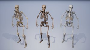 human remains skeleton body model