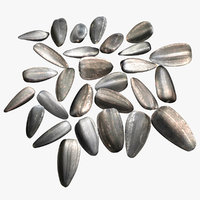 sunflower seeds 3D model