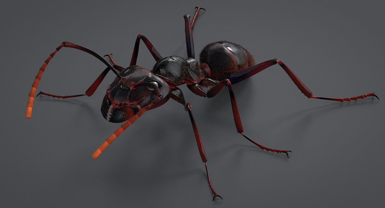 realistic black ant real model
