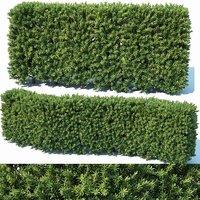 Taxus Baccata # 2 modular hedge 80cm
