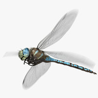 3D dragonfly paddle-tailed darner animation flying model