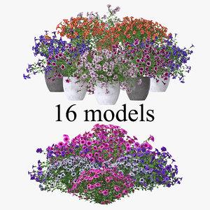 petunia flowers model